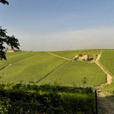 Kleine Weinprobe mit Roero-Weinen und 3-Gänge-Menu am 22.10.2017