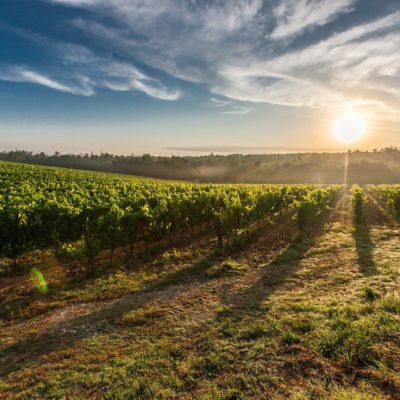 Kleine Weinreise durch Italien mit einem 3-Gang-Schlemmer-Menu am 03.09.21 und 04.09.21 19 Uhr